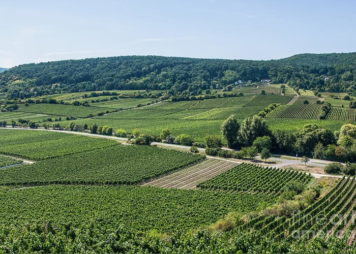 Vineyard Greeting Card featuring the photograph Vineyards In Rhineland Palatinate by Palatia Photo