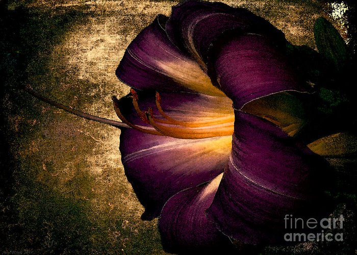 Iris Greeting Card featuring the photograph Vintage Flower by Mim White