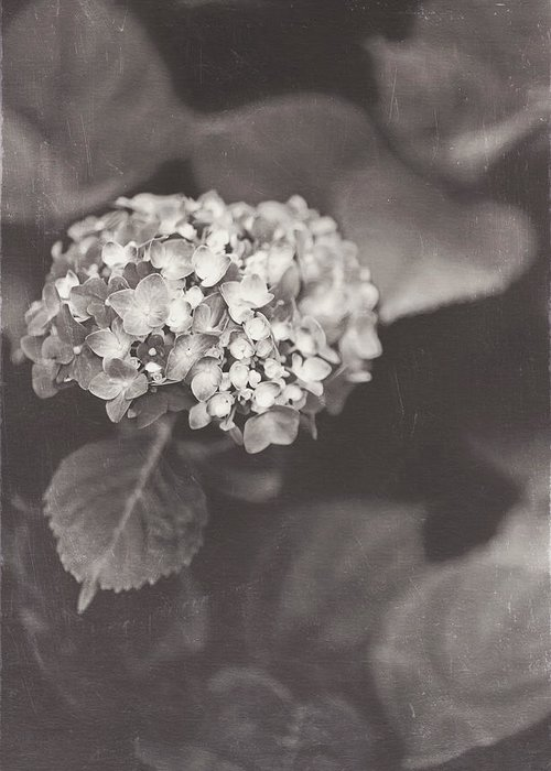 Hydrangea Greeting Card featuring the photograph Vintage Hydrangea by Ken Gehring