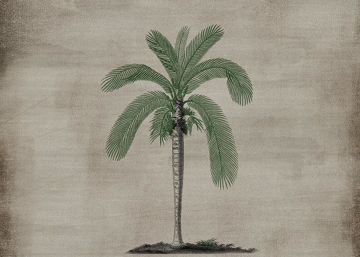 Vintage Greeting Card featuring the photograph Vintage Palm Tree by P S