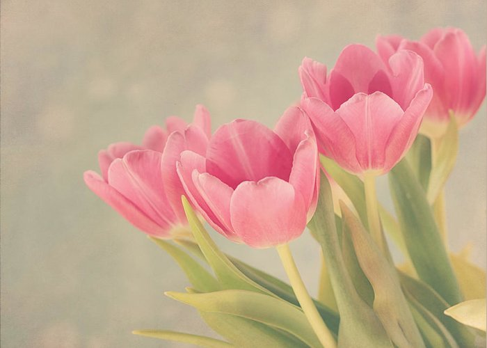 Tulip Greeting Card featuring the photograph Vintage Pink Tulips by Kim Hojnacki