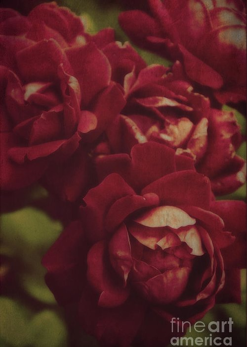 Roses Greeting Card featuring the photograph Vintage Roses by Debra Fedchin