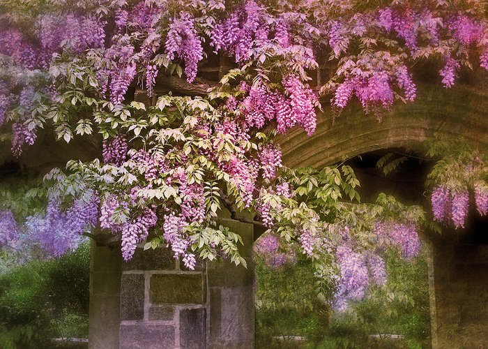 Wisteria Leaves Greeting Cards