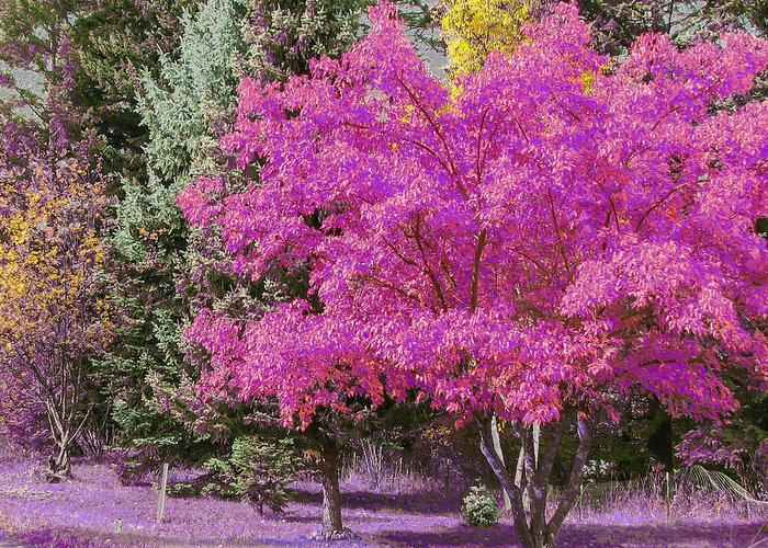 Violet Greeting Card featuring the digital art Violet Autumn by Curtis Stein