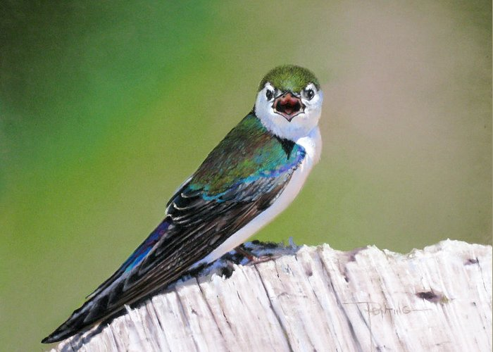 Birds Greeting Card featuring the painting Violet Green Swallow by Dianna Ponting