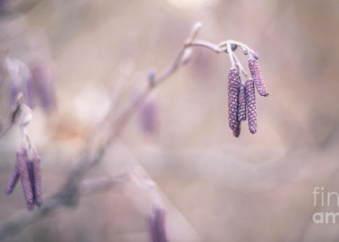 2x1 Greeting Card featuring the photograph Violet Hazel by Hannes Cmarits