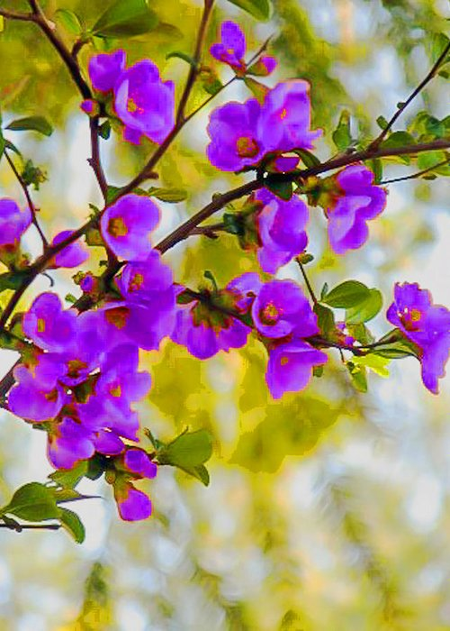 Violet Greeting Card featuring the digital art Violet Quince by Curtis Stein