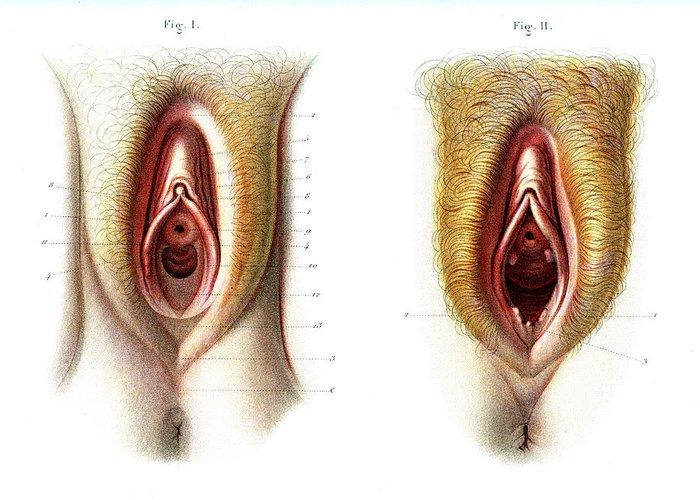 Macro photography vulva