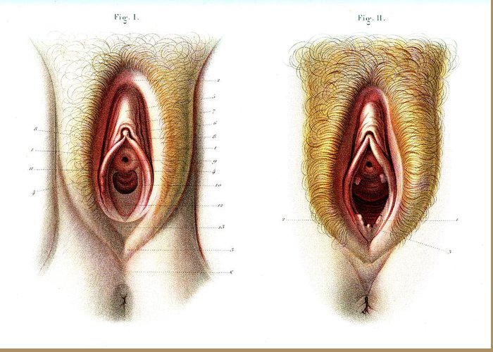 Virgin And Non Virgin Vulva Anatomy Greeting Card For Sale By