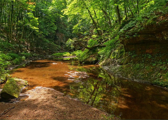 Derward's Glen Greeting Card featuring the photograph Wading In The Creek by Leda Robertson