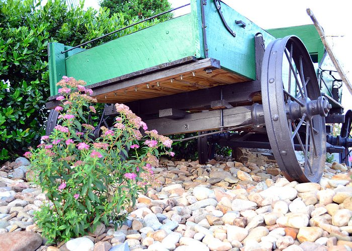 Floral Greeting Card featuring the photograph Wagon And Blooms by Larry Bishop