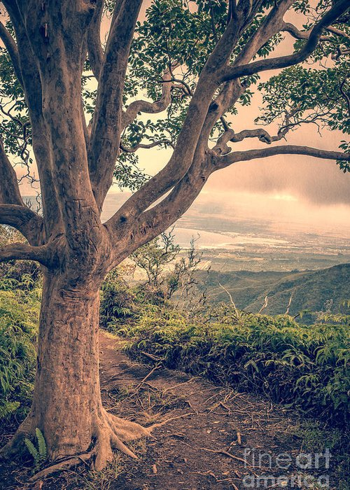 Hawaii Greeting Card featuring the photograph Waihee Ridge Trail Maui Hawaii by Edward Fielding