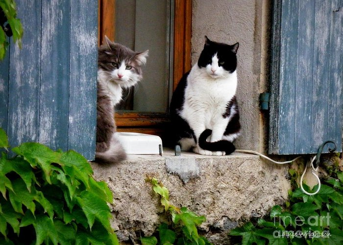 Cats Greeting Card featuring the photograph Waiting For Dinner by Lainie Wrightson