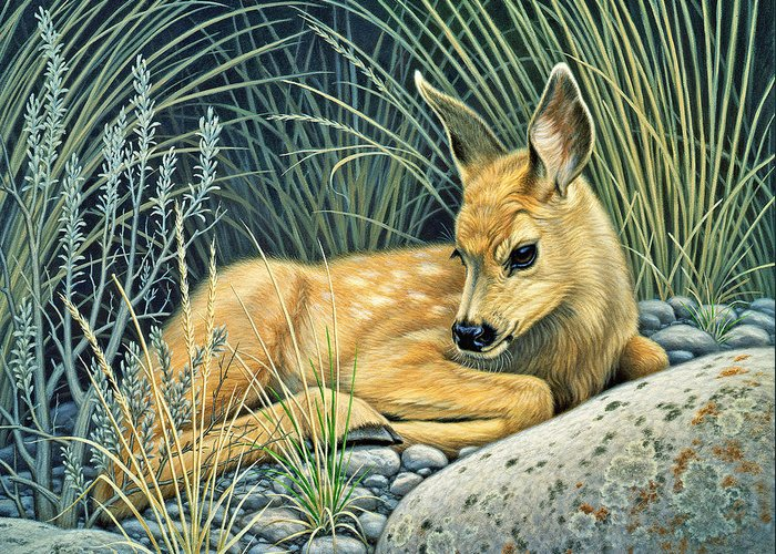 Fawns Greeting Cards