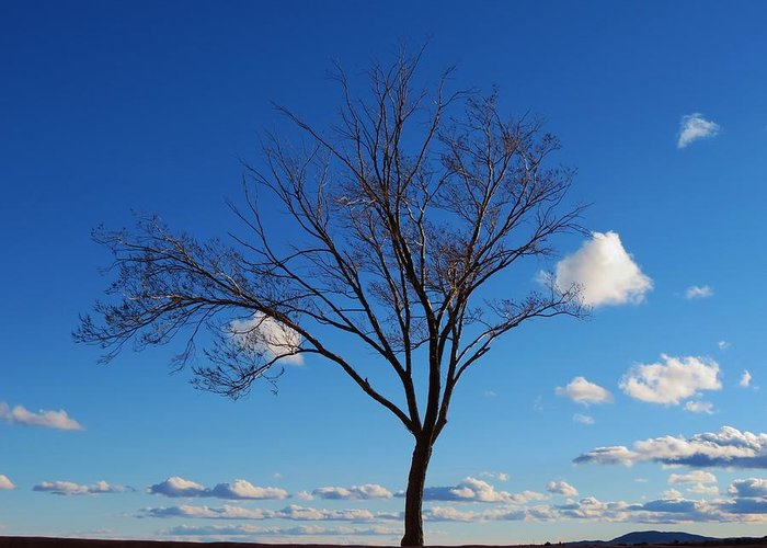 Tree Greeting Card featuring the photograph Waiting For Spring by Feva Fotos