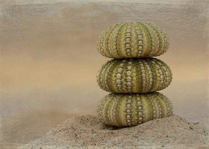 Sea Urchins Greeting Card featuring the photograph Waiting For Sunset by Fraida Gutovich
