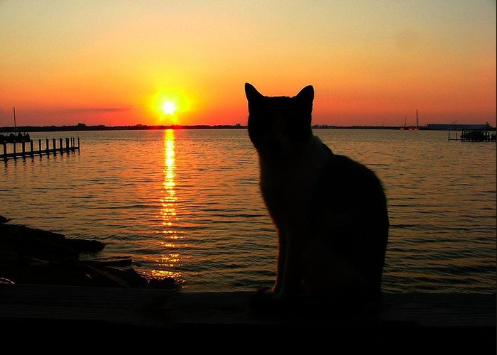 Cats Greeting Card featuring the photograph Waiting For The Shrimpers To Come In With Their Catch by Julie Dant