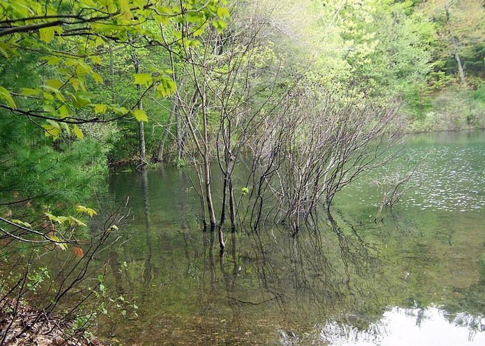Walden Pond Greeting Card featuring the photograph Walden Pond by Catherine Gagne