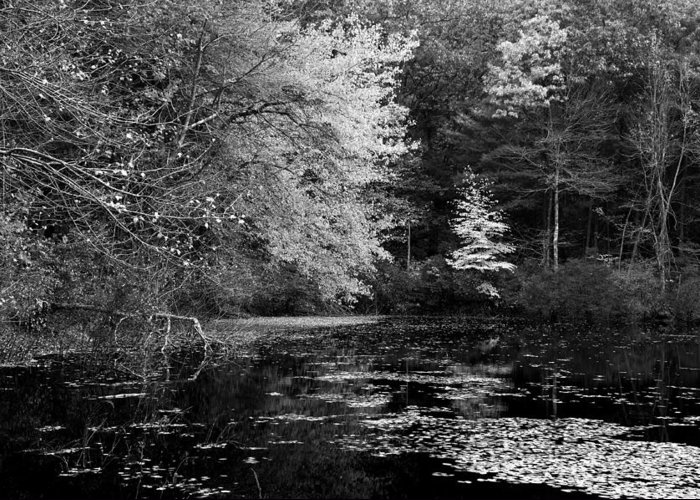 Massachussetts Greeting Card featuring the photograph Walden Pond by Christian Heeb