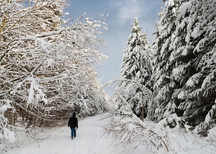 Winter Greeting Card featuring the photograph Walk In The Winterly Forest With Lots Of Snow by Matthias Hauser
