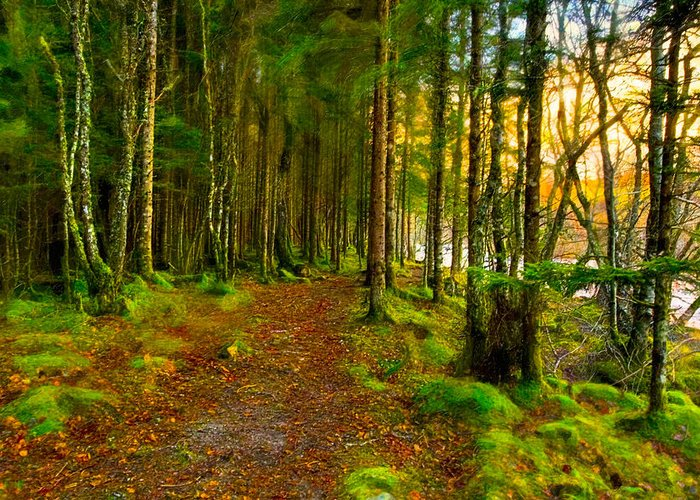 Scottish Highlands Greeting Card featuring the photograph Walking In A Scottish Highland Wood by Mark E Tisdale