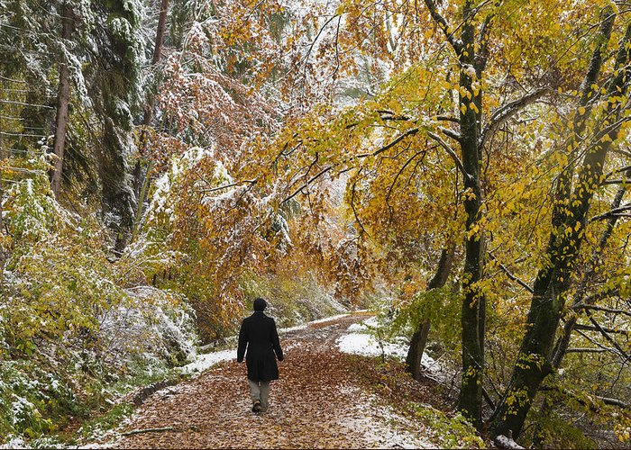 Fall Greeting Card featuring the photograph Walking Into Winter - Beautiful Autumnal Trees And The First Snow Of The Year by Matthias Hauser
