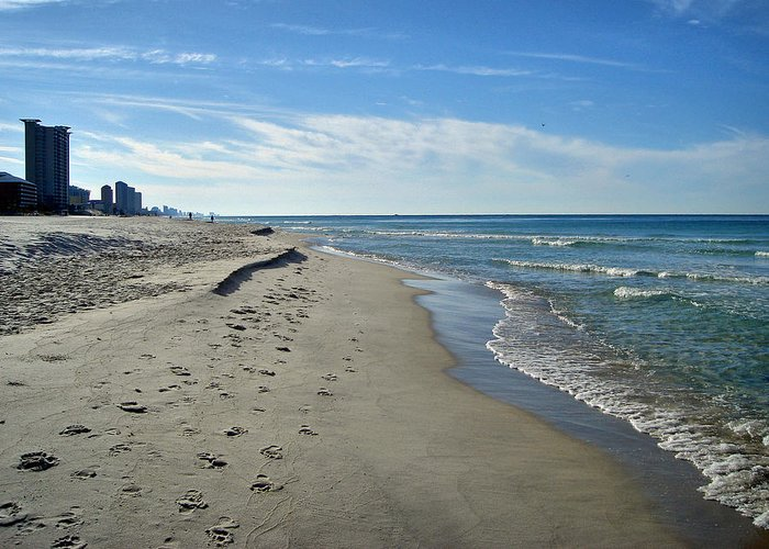 Beach Greeting Card featuring the photograph Walking The Beach by Sandy Keeton