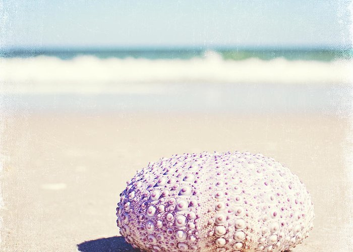Sea Urchin Shells Greeting Cards