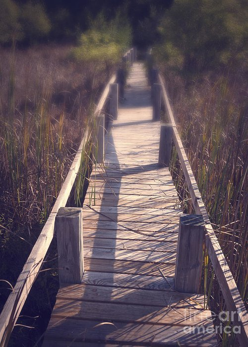 Appalachian Trail Greeting Card featuring the photograph Walkway Through The Reeds Appalachian Trail by Edward Fielding