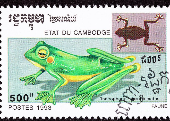 Photograph Greeting Card featuring the photograph Wallace's Flying Frog by Jim Pruitt