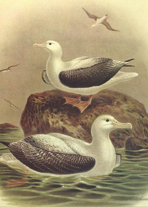Albatross Greeting Cards