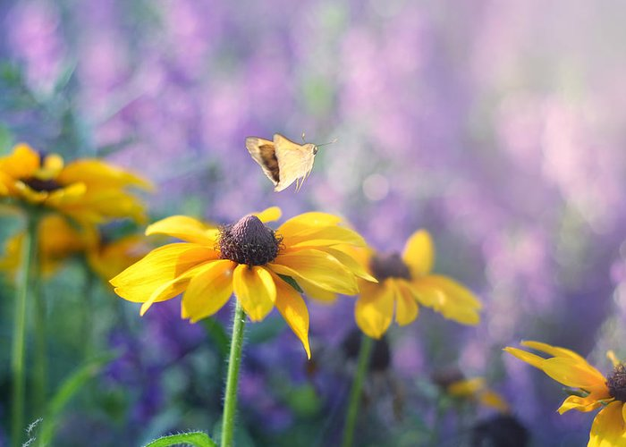 Butterflies On Flowers Greeting Card featuring the photograph Wanderlust by Amy Tyler