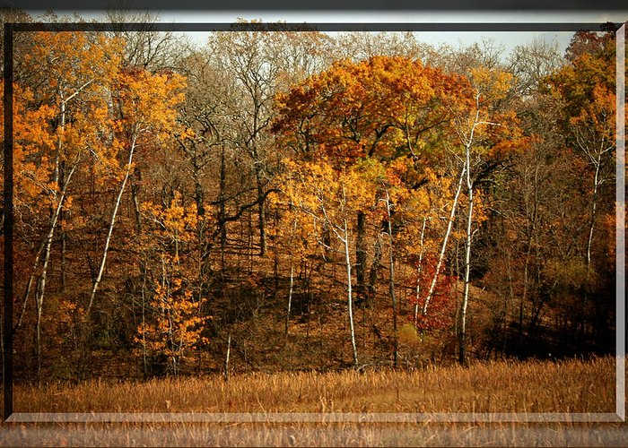 Autumn Greeting Card featuring the photograph Warm Autumn Glow by Susan McMenamin