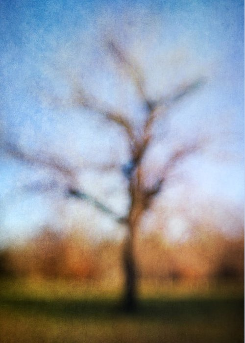 Blur Greeting Card featuring the photograph Warner Park Tree by David Morel