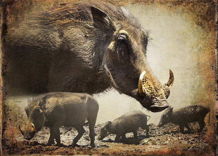 Warthog Greeting Card featuring the photograph Warthog Profile by Ronel Broderick