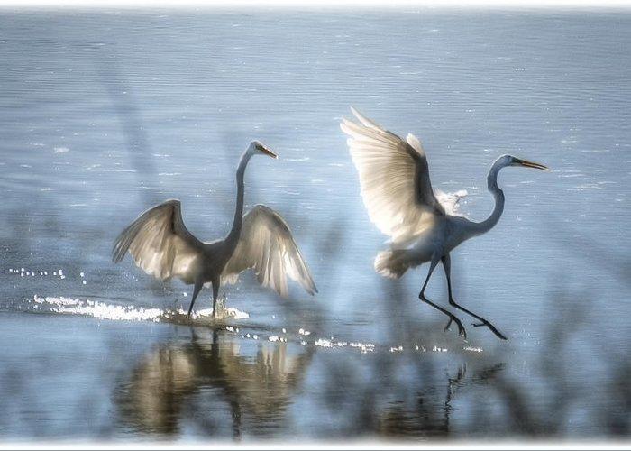 White Egret Greeting Card featuring the photograph Water Ballet by Saija Lehtonen