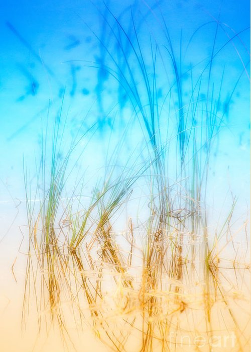 Outer Banks Greeting Card featuring the photograph Water Grass - Outer Banks by Dan Carmichael