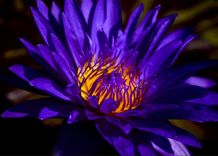 Aquatic Flower Greeting Card featuring the photograph Water Lily 7 by Julie Palencia