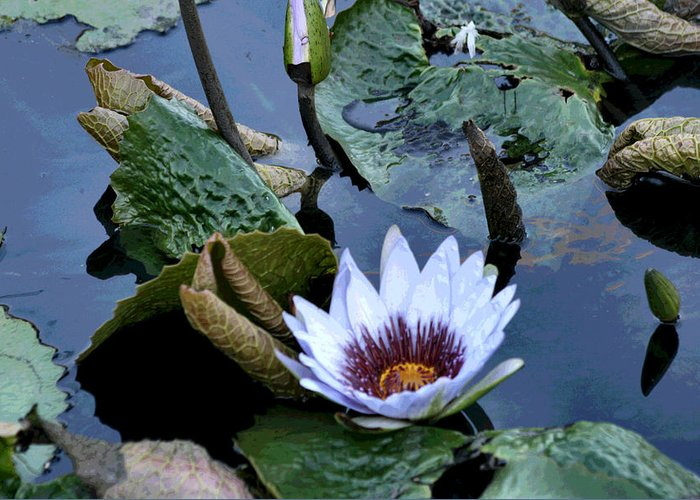 Water Greeting Card featuring the photograph Water Lily by Sharon McLain