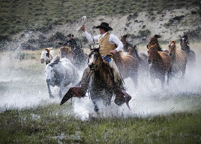 Sombrero Ranch Greeting Card featuring the photograph Water Wranglers by Pamela Steege