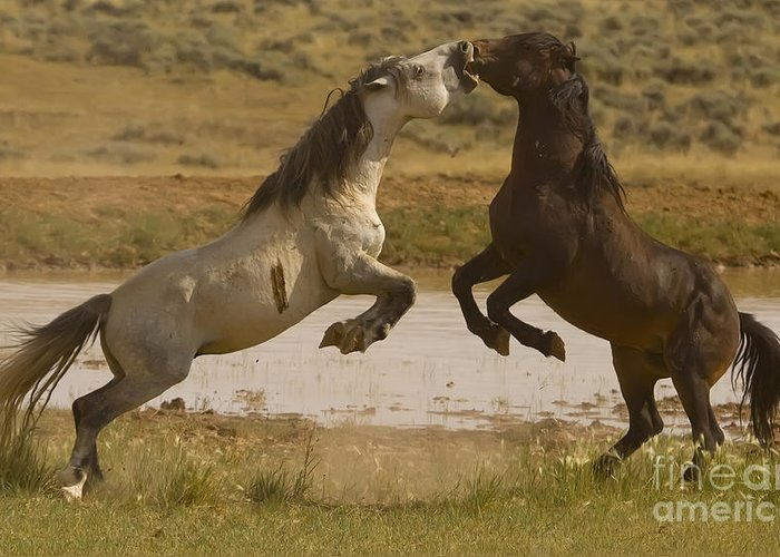 Wild Horses Greeting Card featuring the photograph Waterhole Challenge by J L Woody Wooden