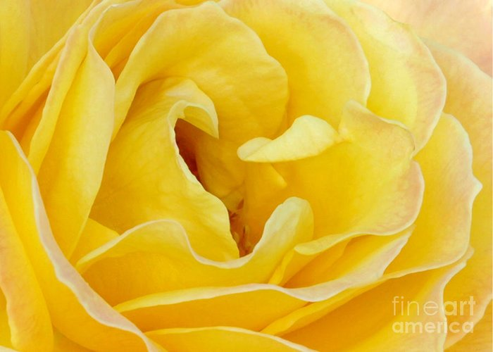Macro Greeting Card featuring the photograph Waves Of Yellow by Sabrina L Ryan