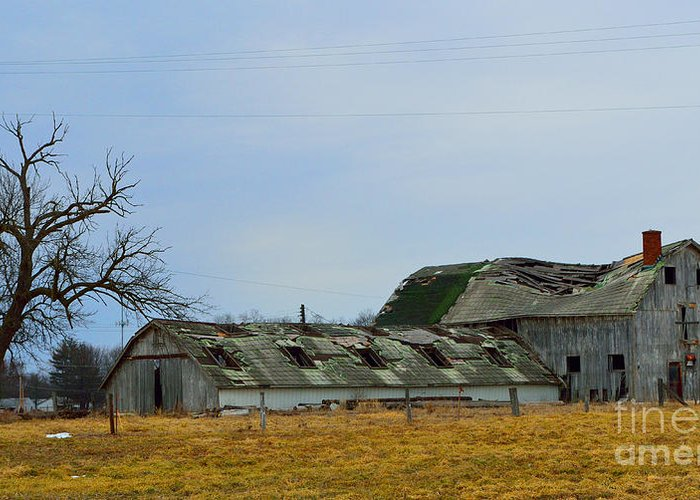 Weathered Barns Greeting Card featuring the photograph Weathered Barns by Alys Caviness-Gober