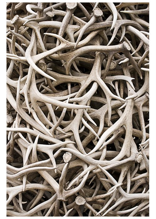 Abstract Greeting Card featuring the photograph Weathered Elk Antlers by Gene Norris
