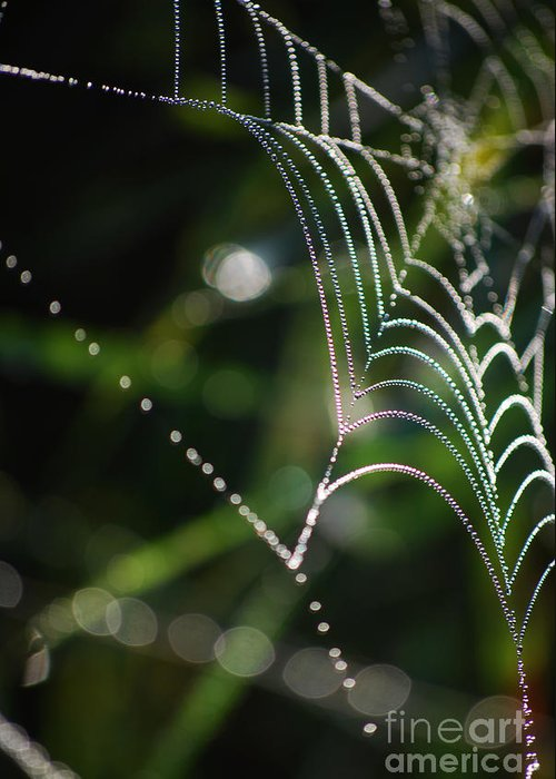 Net Greeting Card featuring the photograph Web In The Morning by Sarka Olehlova