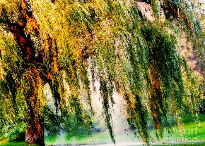 Weeping Willow Tree Greeting Card featuring the photograph Weeping Willow Tree Painterly Monet Impressionist Dreams by Carol F Austin