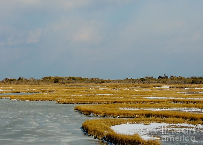 Assateague Greeting Card featuring the photograph Welcome To Assateague by Lana Hauser