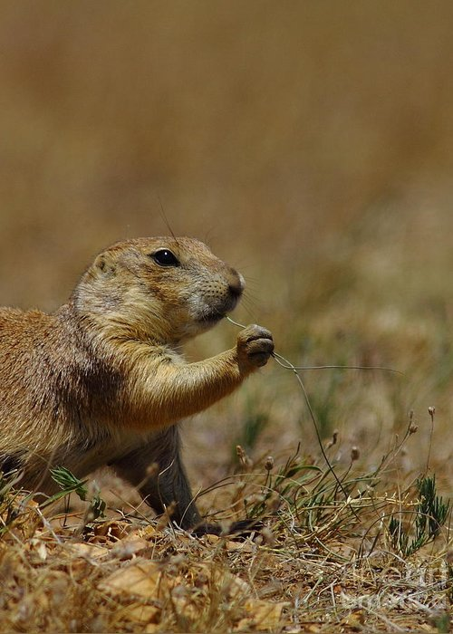 Prairie Dog Greeting Card featuring the photograph Well I Reckon So by Robert Frederick