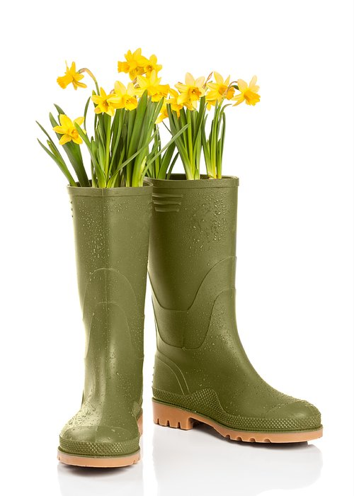 Spring Greeting Card featuring the photograph Wellington Boots by Amanda Elwell