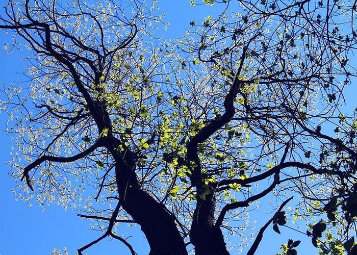 Brilliant Blue Sky Greeting Card featuring the photograph Western Michigan Trees 1 by Sylvia Herrington